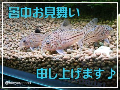 2006_0726_130501.JPG